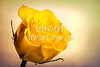Yellow Rose Image on White 1625.04
