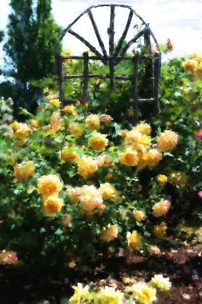 Oregon Garden yellow roses and trellis