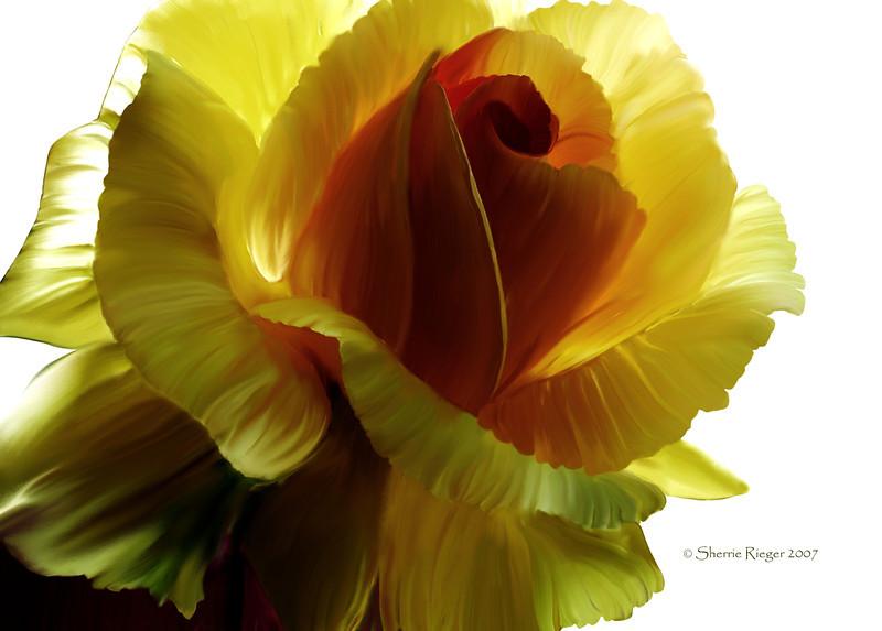 Big yellow rose 3