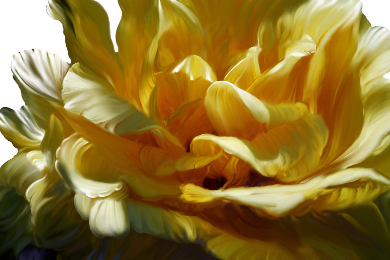 Big yellow rose 2