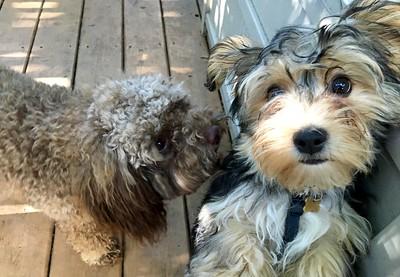 Rosie and her friend, Lucky Worden