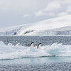 Two Adelie Penguins dwarfed by the scenery near Cape Bird