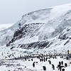 The astounding scenery near the Adelie Penguin colony with hanging and Piedmont glaciers, huge icicles hanging from the cliffs, a large area of push ice against the shore and penguins everywhere!