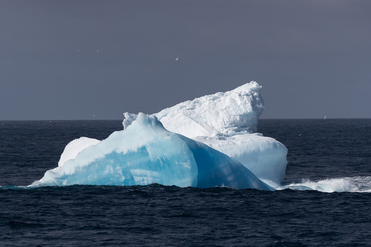 A beautifully coloured iceberg in the northern Ross Sea with many Snow Petrels flying around it