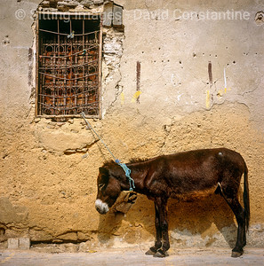 Fez, Morocco. May 2004