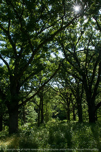 015-forest-wdsm-16jun16-12x18-004-9939