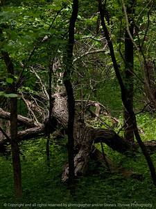 015-tree_fallen-wdsm-13jun12-001-6725