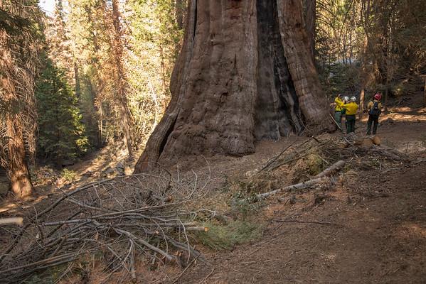 Boole Tree Hike