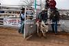 Calf Riding 2-12-12 (2)