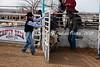 Calf Riding 2-12-12 (1)