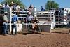 Calves 042112_ (8)