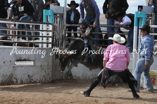 2-10-13 Sun Steers