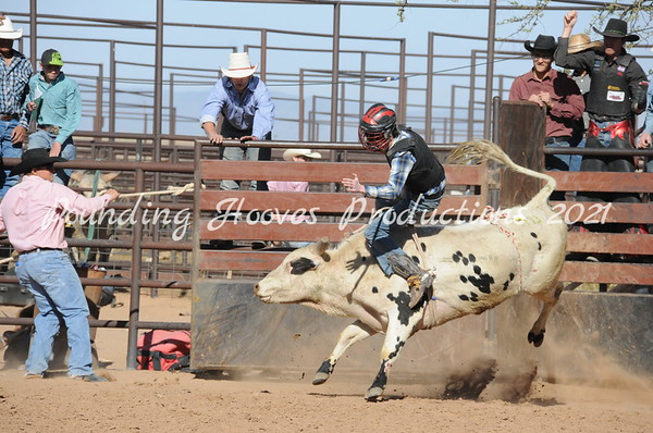 SW Livestock Buckingstock Sale