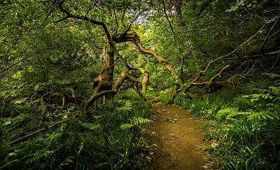 On the path to Roughting Linn Waterfall.