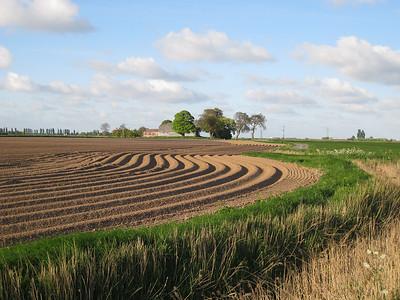Fields near Fosdyke