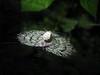 09-04-08-08-19-58_st_web