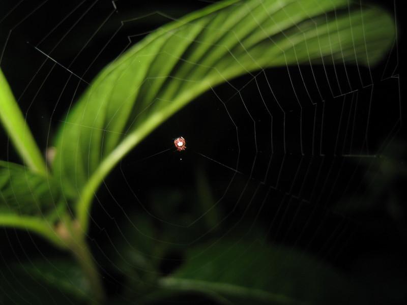 09-12-28-18-20-05_st_web