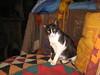 09-04-26-11-11-11_st_web