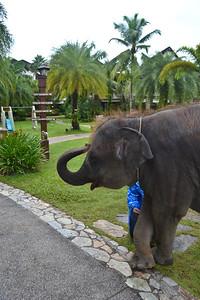 Elephant at breakfast