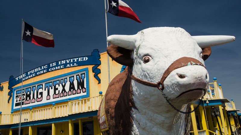 Cow at The Big Texan