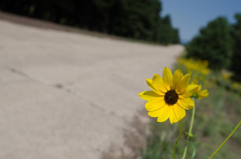 Hitchhiking Flower