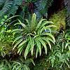 Fantastic Ferns