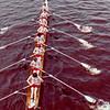 MIT/Harvard/Dartmouth race in 1981