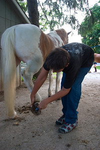 Cleaning the hoofs, never the most pleasant of tasks but always necessary.