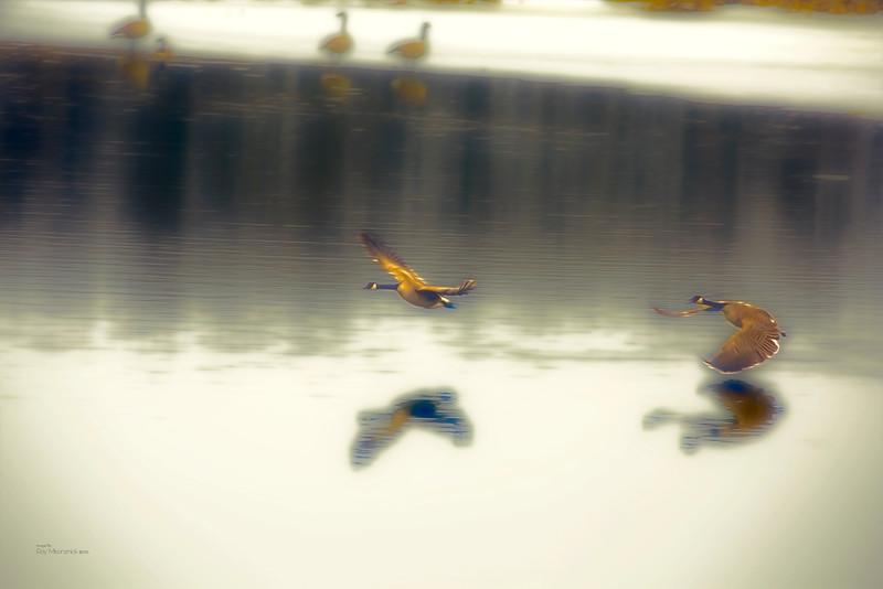 """Spring Geese"""