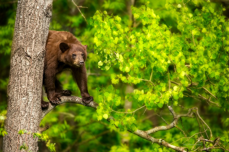 """""""Out On A Limb"""""""