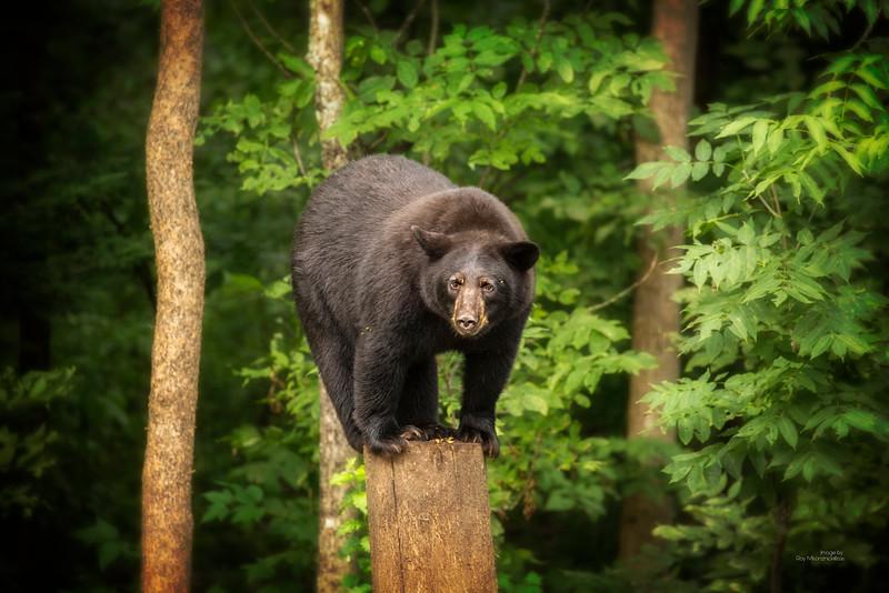 """Bear On A Steeek"""