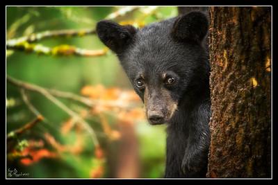 """""""Peek A Boo Bear"""""""