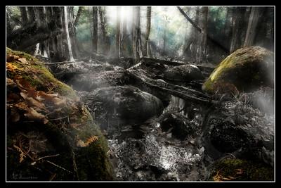 """""""Forest Awakening"""""""
