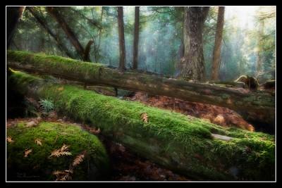 """Green Woods"""