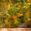 """Into Fall"""