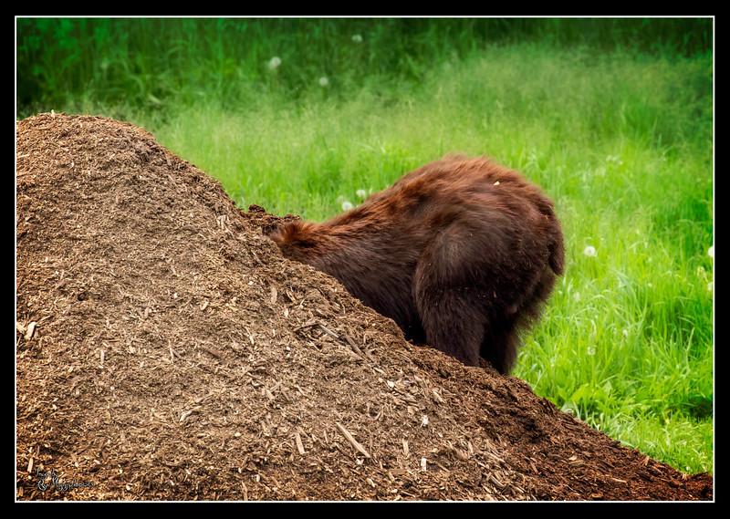 """Bear Commentary"""