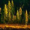 """Sunrise Tamaracks"""