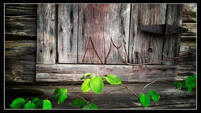 """A.M.'s Window"""