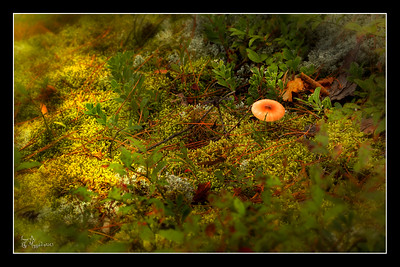 """Forest Floor #2"""