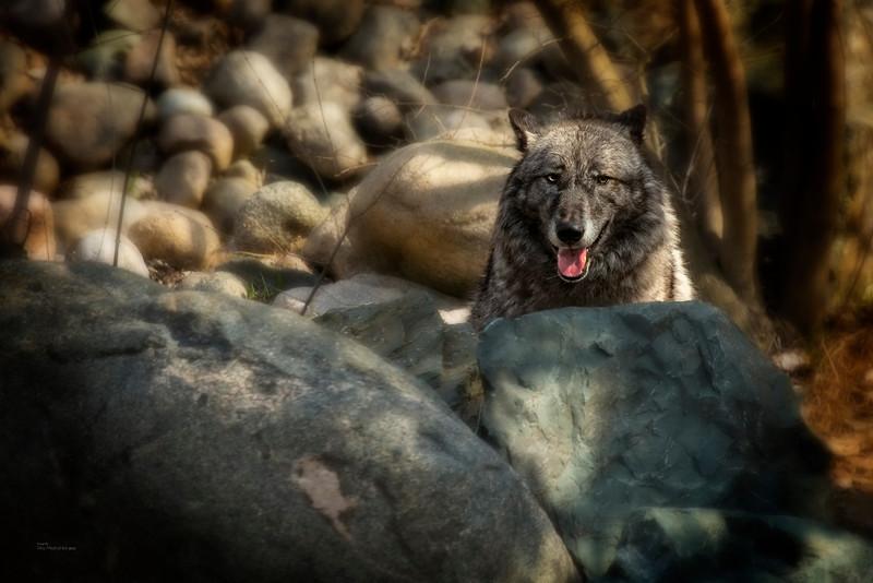 """Luna Rocks"""