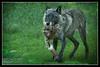 """""""Being Wolf"""""""