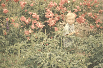 Arthur between roses * tomatoes 1955