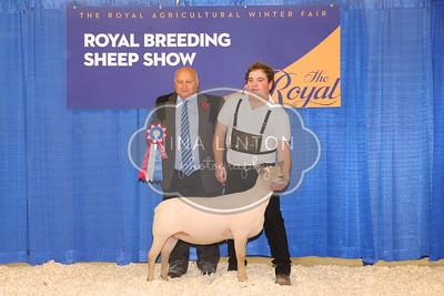 RAWF Breeding Sheep Show AOB Champions and Candids 2017