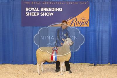 RAWF Breeding Sheep Show Longwool Champions and Candids 2017