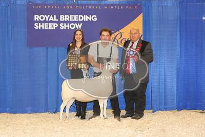 RAWF Breeding Sheep Show NCC Champions and Candids 2017