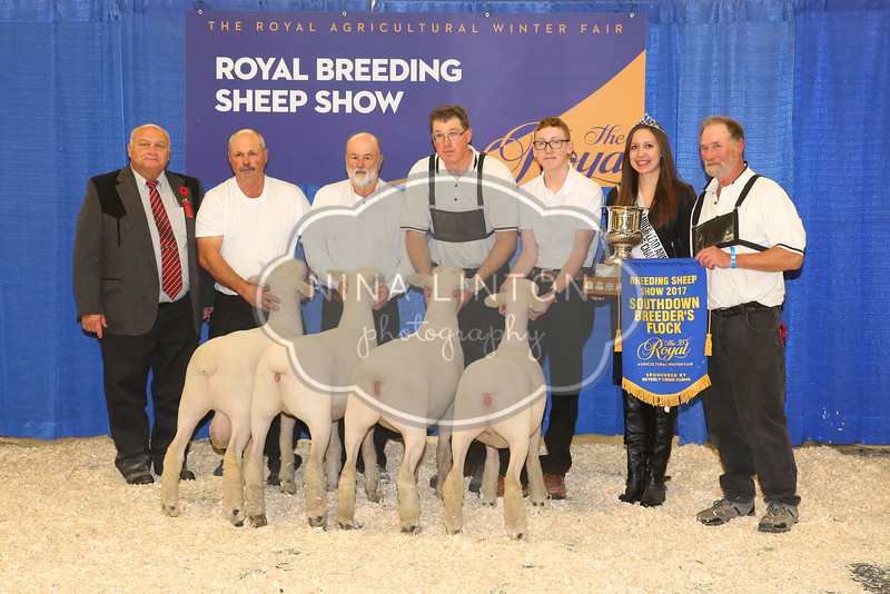 RAWF Breeding Sheep Show 2017