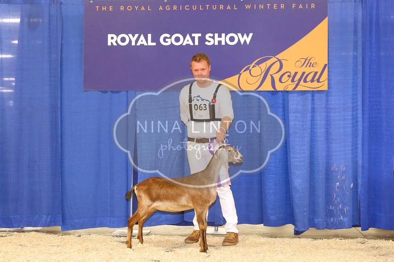 RAWF Dairy Goat Show 2017