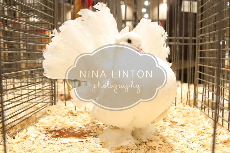 RAWF Poultry Show 2017