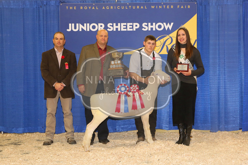 RAWF Youth Sheep Show 2017