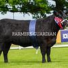 Aberdeen-Angus champion, Weeton Blackbird V519 from Brailes Livestock, Moreton-In-Marsh
